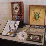 Expo Fima-DavidP. Musée des Sciences Naturelles de Tournai-2004 (15)