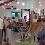 Expo Fima-DavidP. Musée des Sciences Naturelles de Tournai-2004 (19)