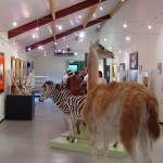 Expo Fima-DavidP. Musée des Sciences Naturelles de Tournai-2004 (33)