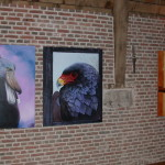 Exposition Fima-Animal Art - Maubeuge - 2006
