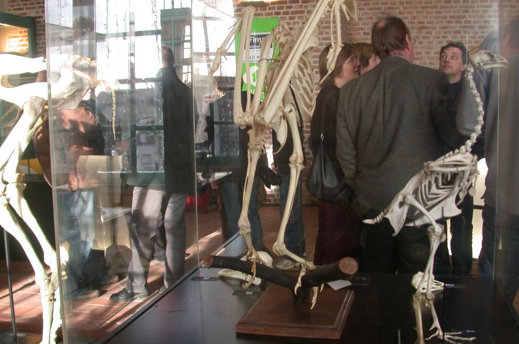 Exposition Fima-Animal Art - Maubeuge - 2006