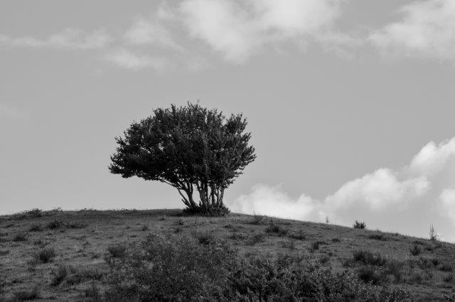 003-arbre couleur bouisse 008